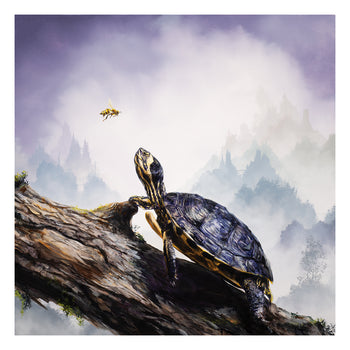"""Box Turtle & Honeybee"""