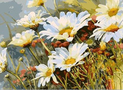 Daisy - Day's eye - Painting By Numbers - Jenra Store