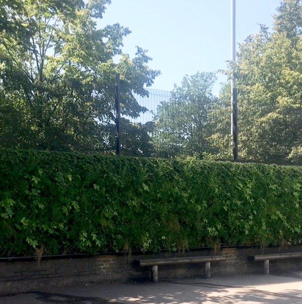 CHISWICK OASIS LIVING WALL