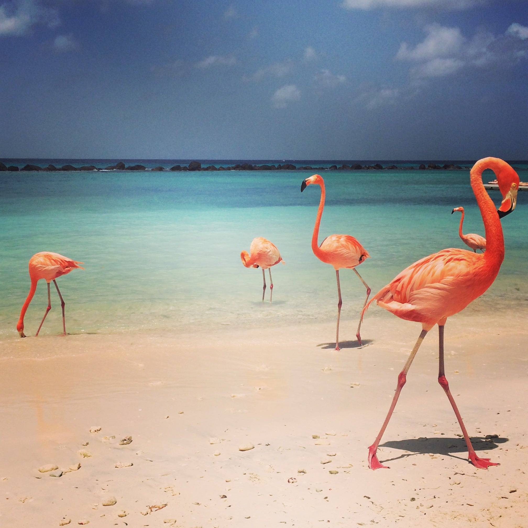 Flamingo Beach Aruba by KARMA for a cure