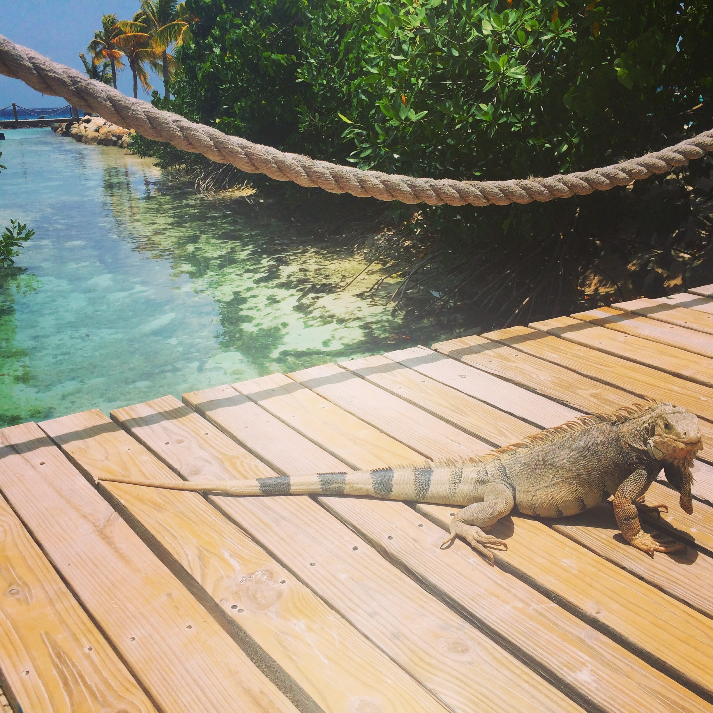 Iguana Beach Aruba Private Island by KARMA for a cure