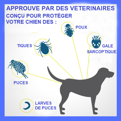 CHEDES large Collier Antiparasitaire Pour Chien
