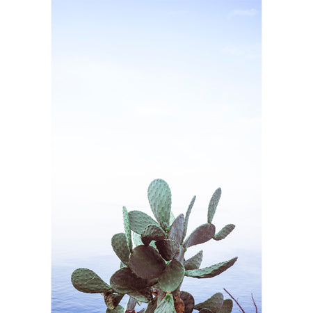 SEASIDE CACTUS PRINT BY STEPHANIE HUNTER
