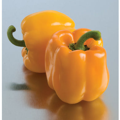 Yellow Bell Pepper Plant - Organic