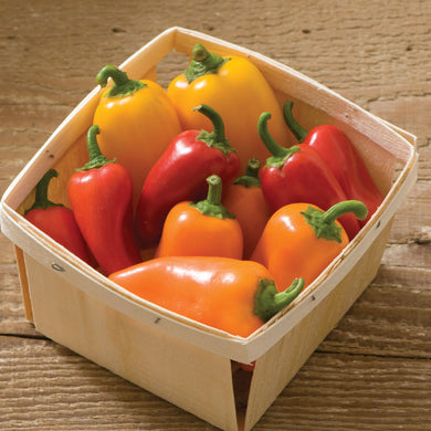 Lunchbox Pepper Plant - Organic
