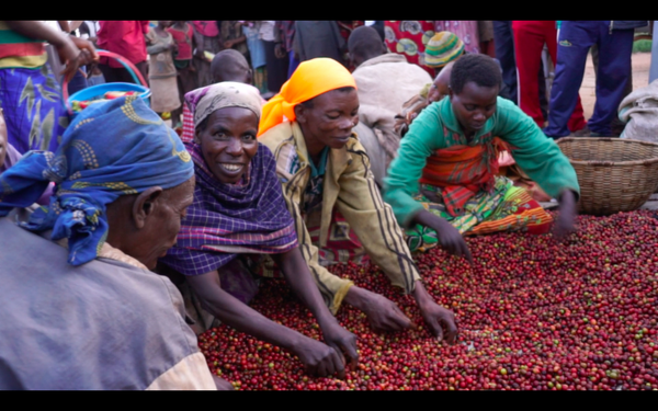 Burundi Kinyovu Washing Station, Matongo Micro-lot. NEW ARRIVAL!