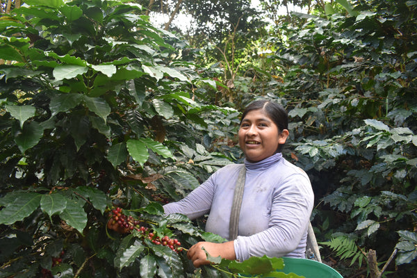 Bolivia Microlot: Carolina Villalobos (Siete Estrellas). Only Available in Salisbury, MA. NEW ARRIVAL!