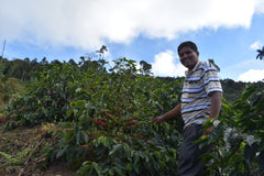 Bolivia Microlot: Celso Mayta Golondrina Geisha. 92-point Competiton Winner. NEW ARRIVAL!