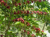Bolivia FTO (AAA) (Caranavi) Available at the Annex, Oakland (CA) and Salisbury, MA. NEW ARRIVAL!