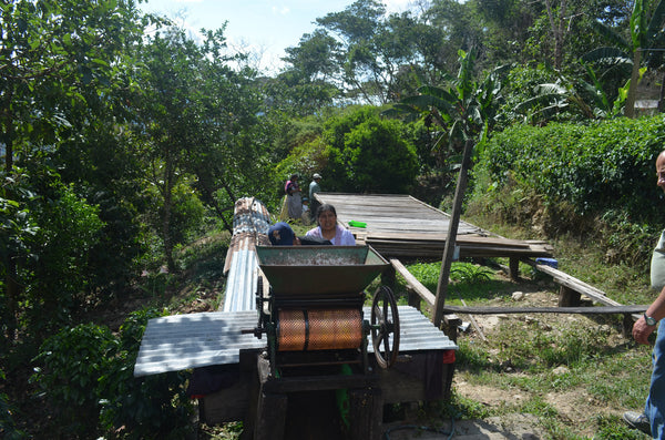 Bolivia Micro-lot: Organic Peaberry (Siete Estrellas) Available at Continental, NJ & Salisbury, MA. NEW ARRIVAL!