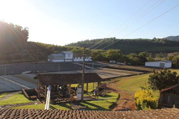 House Roast: Fazenda Cachoeira da Grama: Pulped Natural AAA (Brazil). NEW!