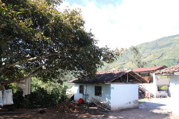 86+ Find: Marco Lasso (Colombia) Microlot Roast. NEW ARRIVAL!