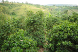 86+ Find: Kinyovu Washing Station (Burundi) Matango Microlot Roast. NEW!