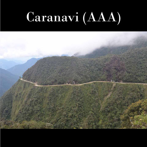 Bolivia FTO (AAA) (Caranavi) New Arrival! Now only available at the ANNEX in CA