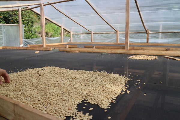 Colombia Micro-lot: Marco Lasso -Nariño. Available at Continetal, NJ  & Salisbury, MA.