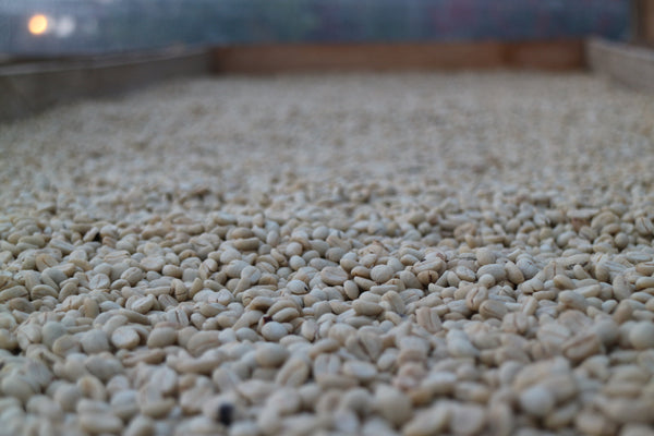 Colombia Micro-lot: Emiliano Trujillo -Huila. Available at Continetal, NJ  & Salisbury, MA. JUST ARRIVED!