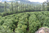 Brazil Sul Minas Natural-Process AAA DECAF