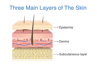 Three layers of the skin - Power Skin Solutions - New Zealand