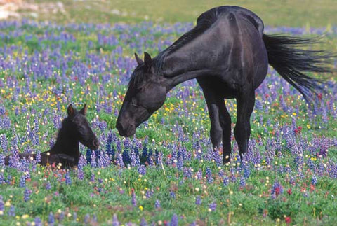 10 Interesting Facts About Wild Mustangs