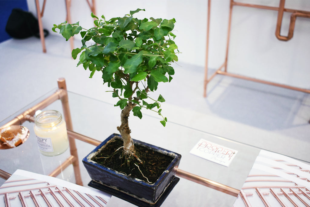 Proper Copper Design Copper Coffee Table with Bonsai at 100% Design 2018