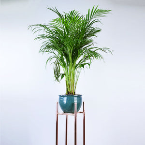 Proper Copper Design-Copper Plant Stand-pure copper-handmade-made in the UK-plant holder