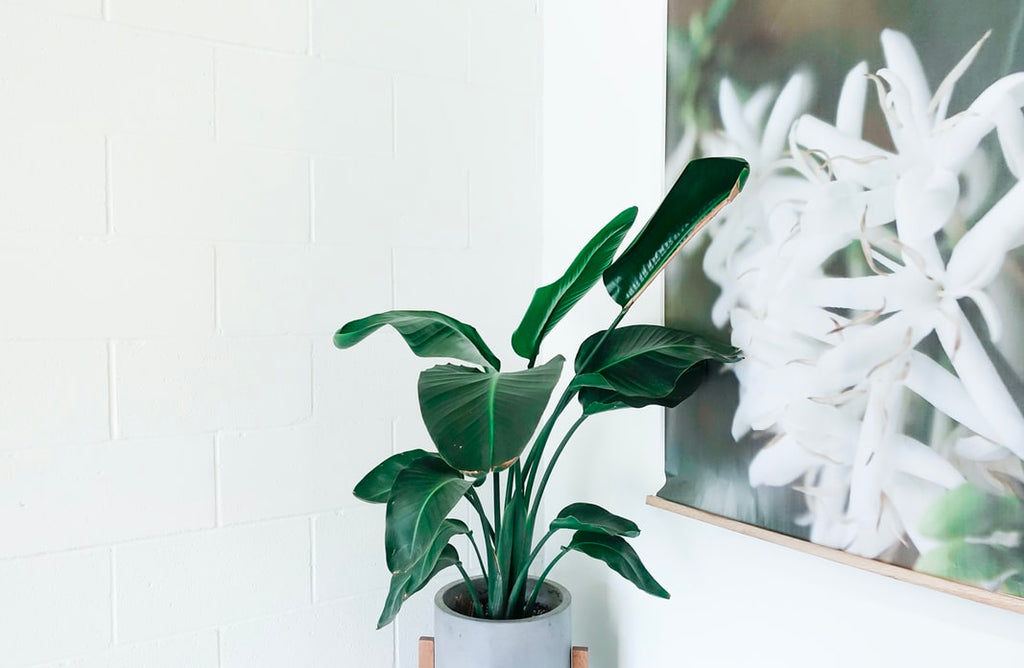 How houseplants can positively impact your wellbeing