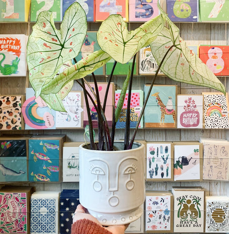 hand holding white plant pot with face design and large plant in the quince and cook store in perth