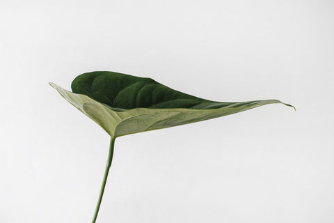 white background with green leaf