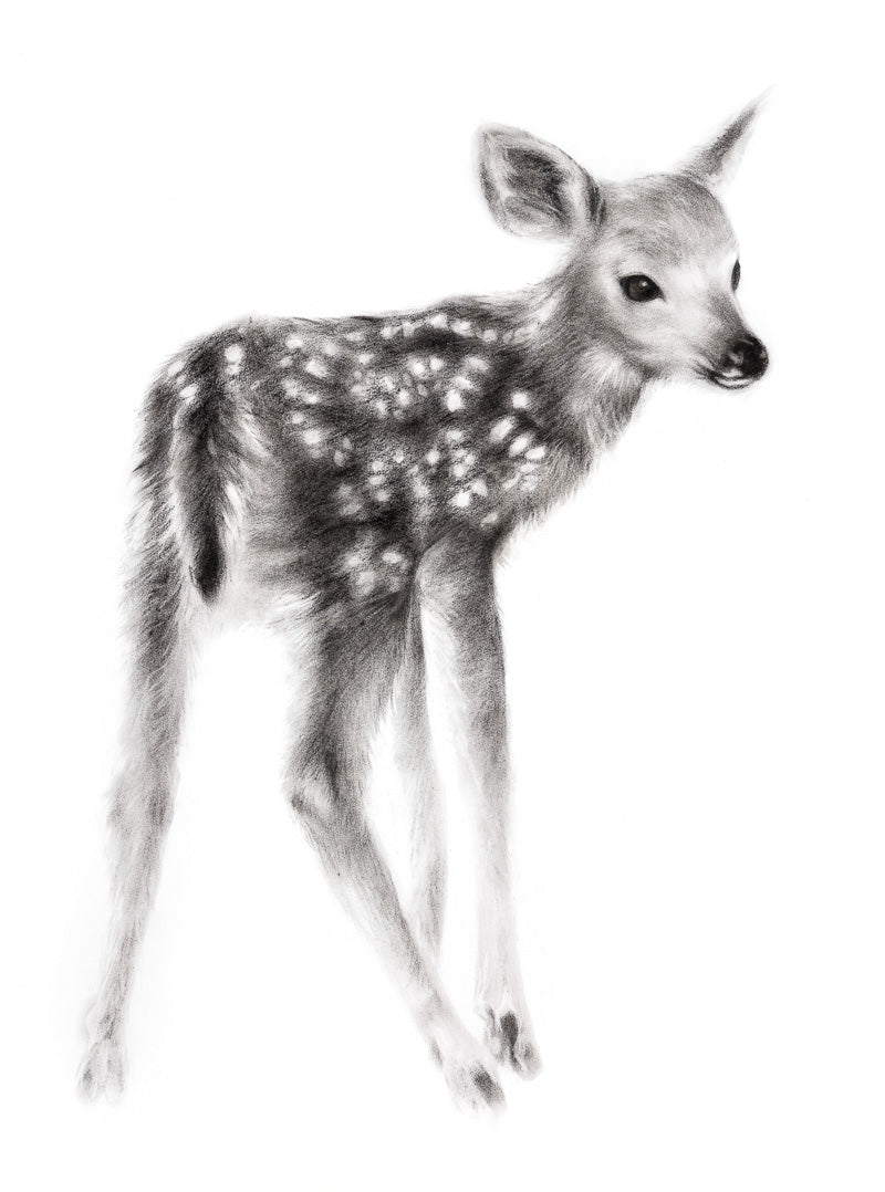 FAWN CHARCOAL