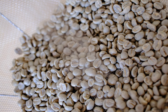 Green Coffee Q-Grade Analysis