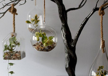 Glass Terrarium Hanging Bowl