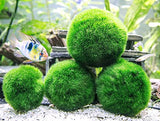6 Marimo Moss Ball Variety Pack - 4 Different Sizes Of Premium Quality Marimo From Giant 2.5 Inch To Small 1 Inch - World'S Easiest Live Aquarium Plant - Sustainably Harvested And All-Natural