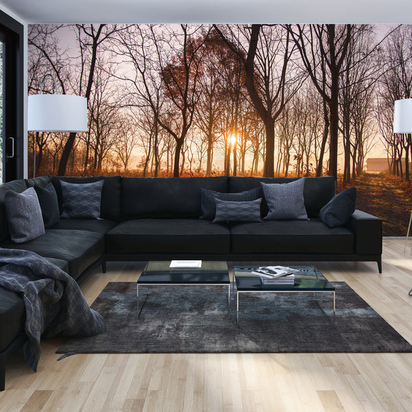 Forest Photo Wall Mural