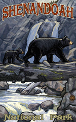 Shenandoah National Park/Bear with Cub On River Crossing Poster • PAL-2697
