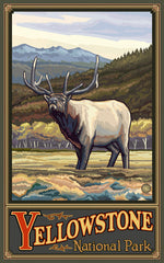 Yellowstone National Park/Elk Poster • PAL-0084