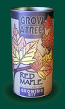 Tree Seed Grow Kit - Red Maple (TSGK - 0010)