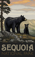 Sequoia National Park / Bear With Cub Poster • PAL-1209