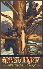 Grand Teton National Park / Bear Cubs In Tree • PAL-0425