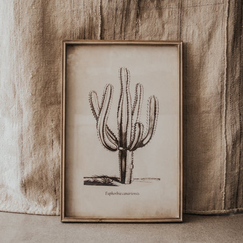Bloomingville Objects 15.75 x 23.5 / Cactus / FINAL SALE Cactus Wall Decor