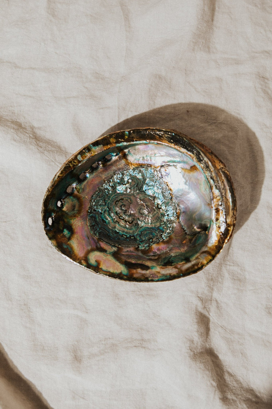 om imports Objects Abalone / Large / FINAL SALE Treasured Things Abalone Offering Bowl