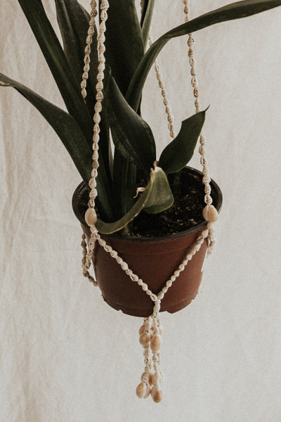 Child of Wild Objects 38-1/2-inches / Seashell Culebra Seashell Plant Hanger
