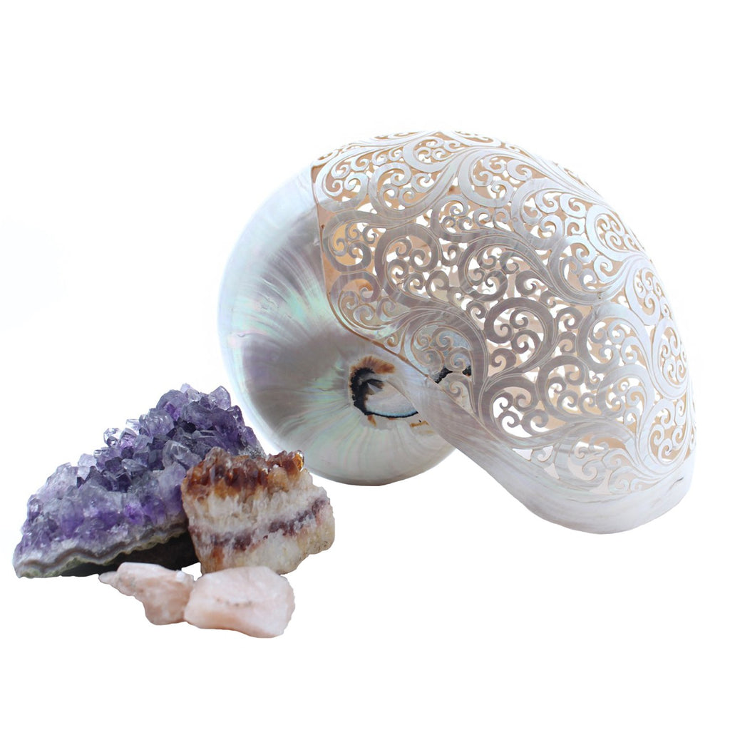 Bali Objects Pearl / FINAL SALE Hand-Carved Pearl Nautilus Shell