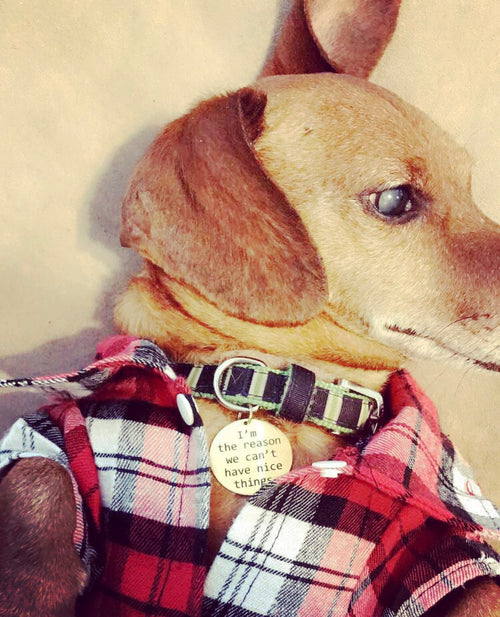 Dog Flannel