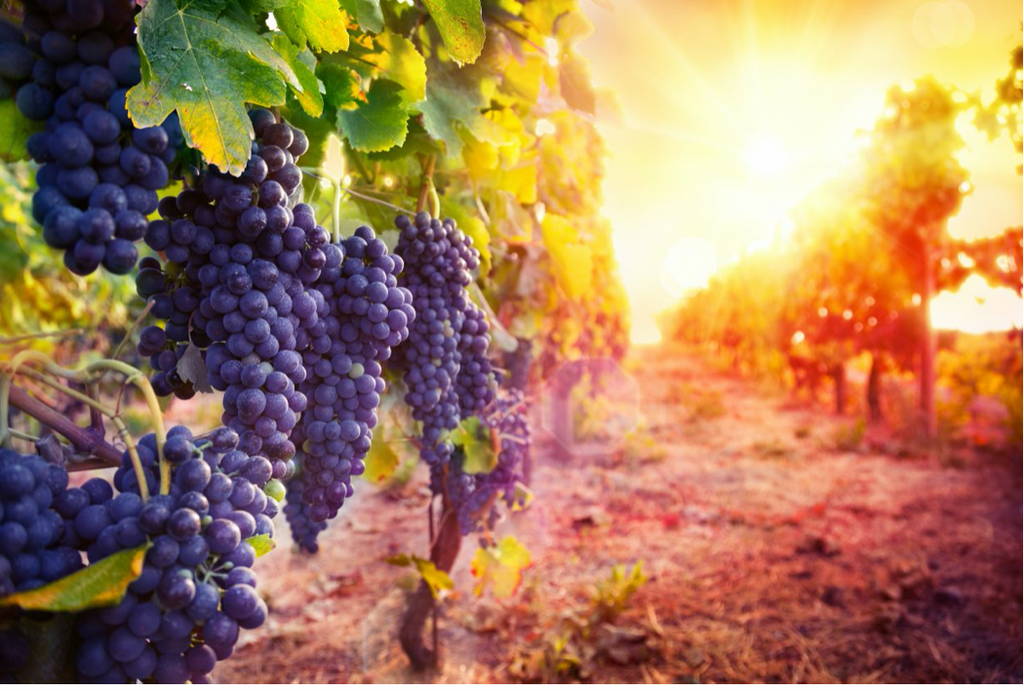 A Complete Guide To Resveratrol Supplements Ebysu Ca