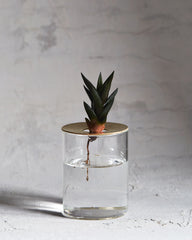 10¹² Terra Lid Vision Glass Terrarium - Brass (OUT OF STOCK)