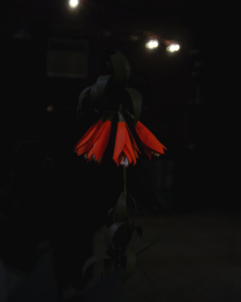 Onao Co. Paper Flower - Orange Fritillaria (OUT OF STOCK)