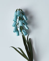 Onao Co. Paper Flower - Blue Muscari