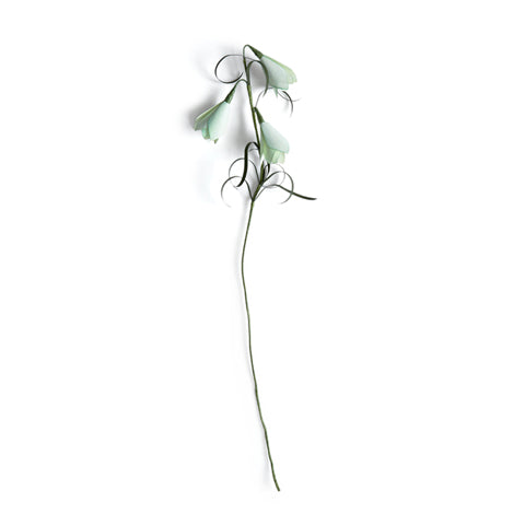 Paper Flower - Fritillaria Verticillata (OUT OF STOCK)