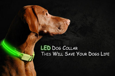 Buy One Get One FREE - LED Dog Collar