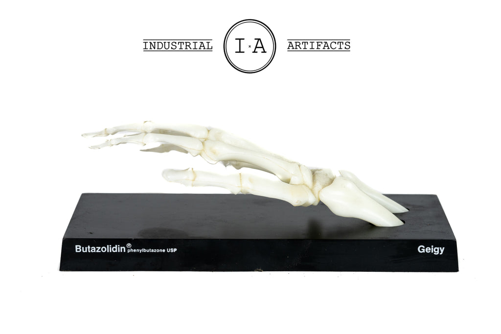Vintage Anatomical Skeletal Hand Model